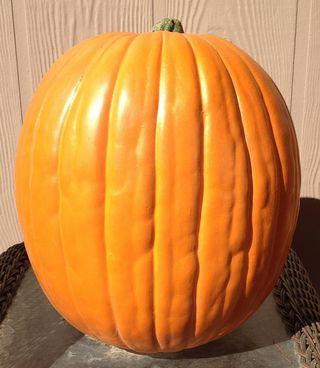 Plain Pumpkin